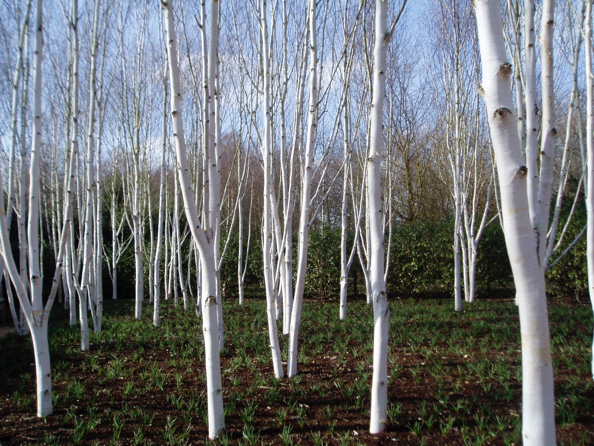 Anglesey Abbey.jpg