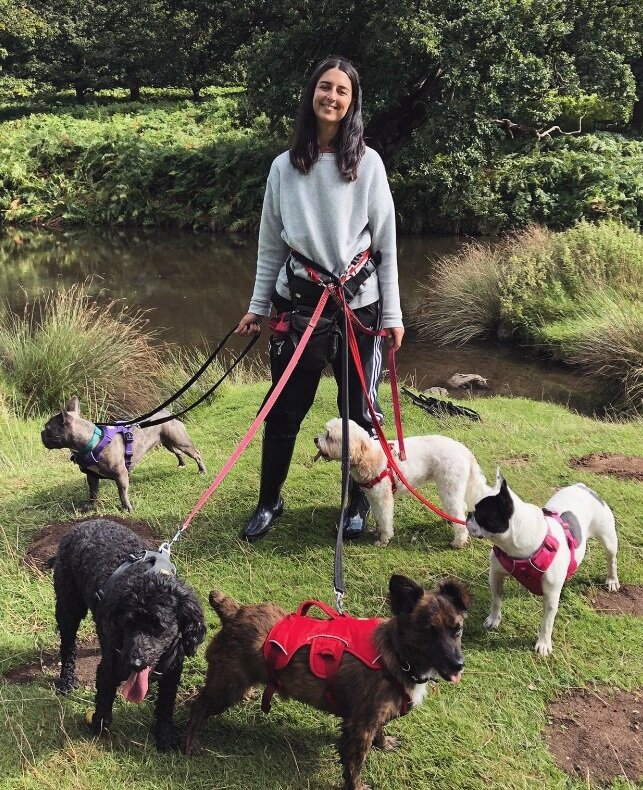 about me - Hi, I'm Lexi and welcome to Dog Days! I have been absolutely animal mad for as long as I can remember, and after working as a dog walker and home sitter for 2 years I decided it was time to take the plunge and go solo.I have tons of experience from volunteering at Manchester Dogs home, to working with paralysed street dogs in Thailand, not to mention looking after my own little menagerie at home, Ruby (Cockerpoo) Martha (Cavapoo) Beatrice (French Bulldog) and Lottie (Silver Tabby). When I'm not in my element and out walking doggos (basically never because what could be better?) I also have a love of painting, am a house plant fanatic and scuba diving fiend. Rest assured that your pets will be in the very best hands, I am fully insured, DBS checked and certified in Dog First Aid, but most importantly, I will love your pets unconditionally as if they were one of my own.