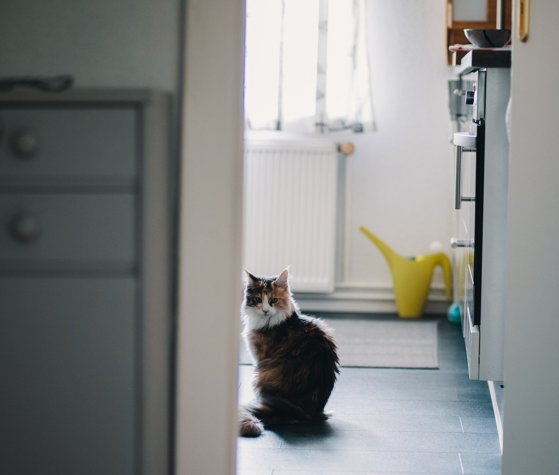 Pet Sitting - Whether you're busy at work or thinking about going away for that well deserved break, this service is paw-fect for cats, dogs and smaller animals as I pop in once or twice a day to clean up, refill water and food bowls and administer any medication needed.Learn more ➝