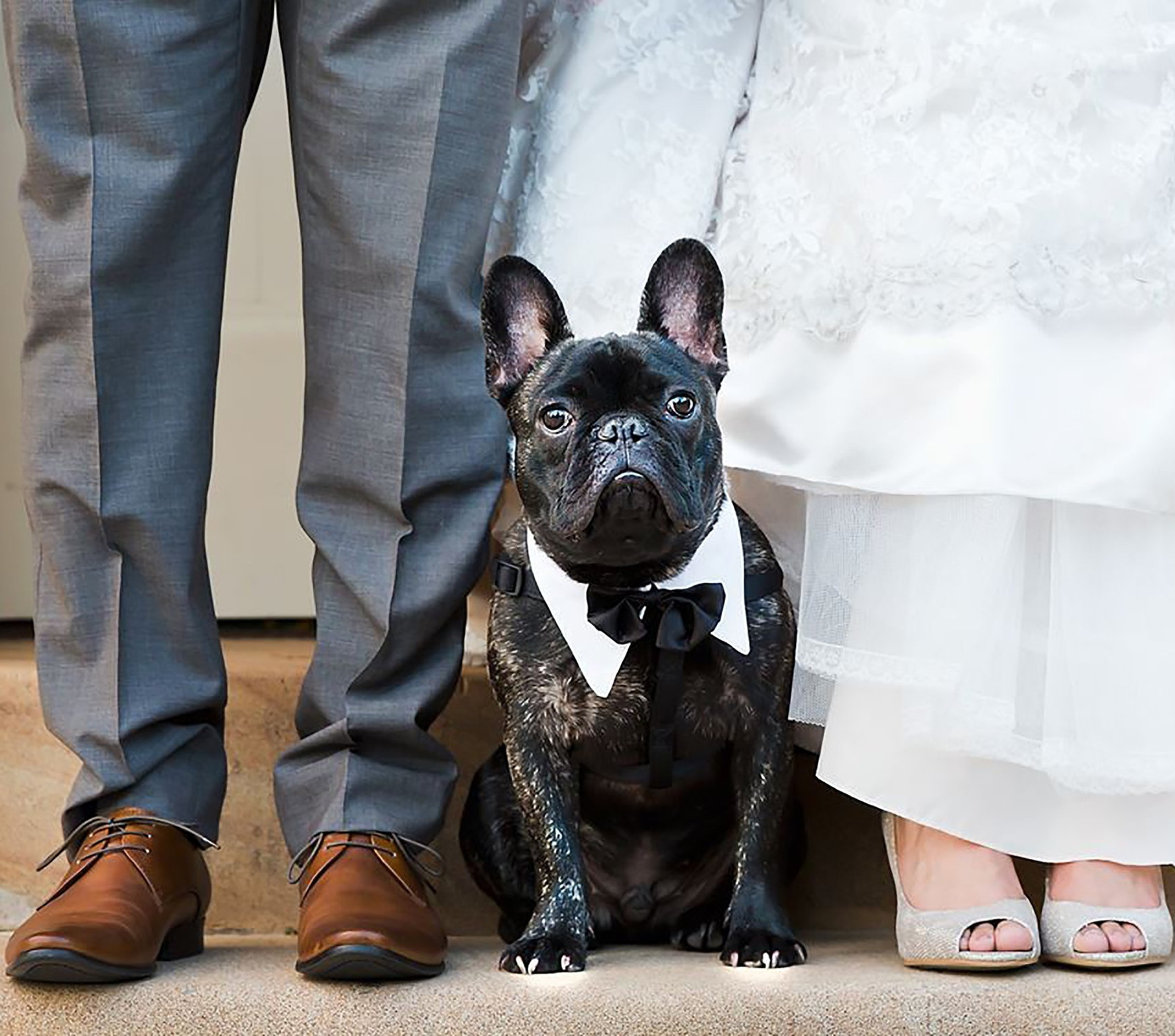Wedding Chaperone - Do you want your dog there on your special day? No problem! I can help with looking after your dog for the day and getting them there to enjoy the day too, all while looking very dapper!Learn more ➝