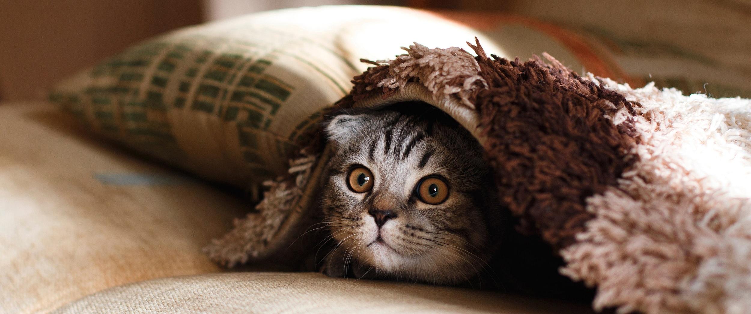 catsitting2.jpg