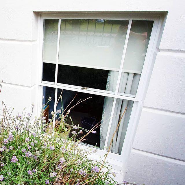 Sash windows looking 👌