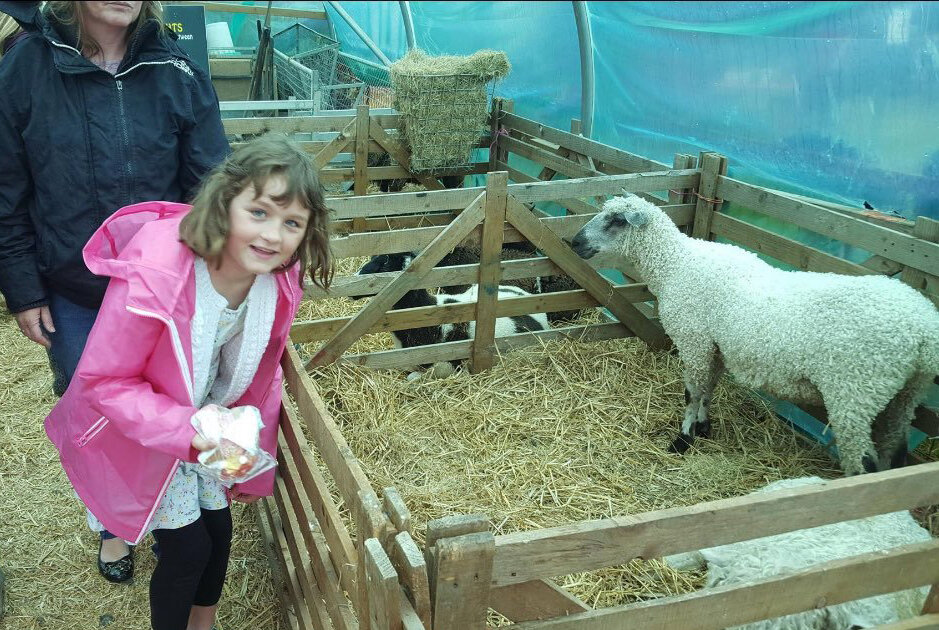 Visiting downland sheep, Binsted