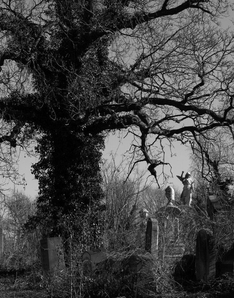 2_Snyder_Abandoned Graveyard.jpg