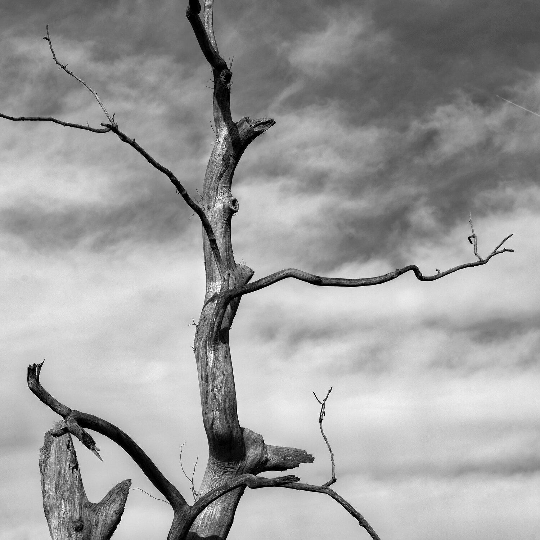 Stark Tree.jpg
