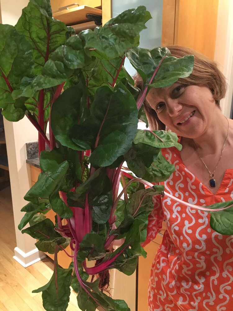 Health and transformation coach - Waltraud Unger - holding Swiss Chard harvested from Tower Garden