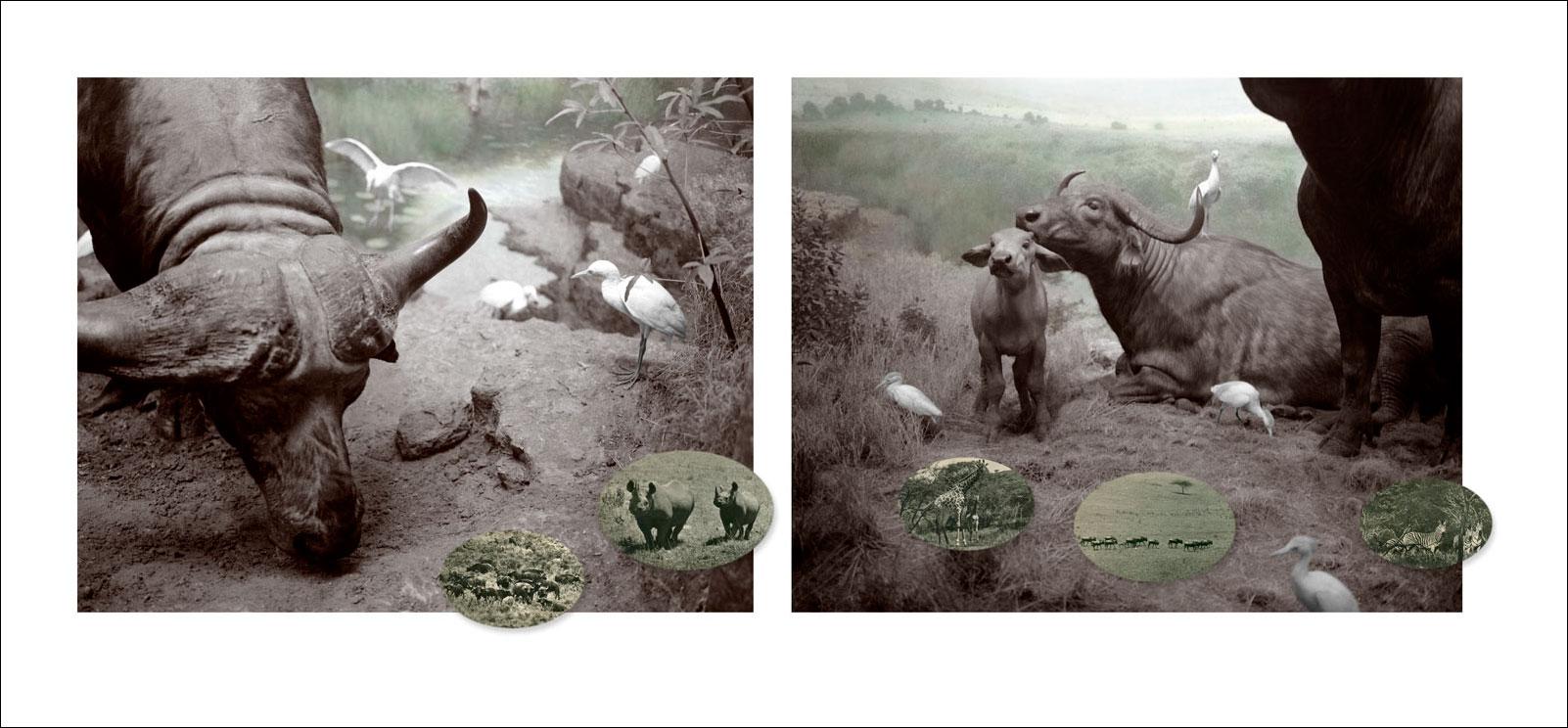buffalo-print_1.jpg