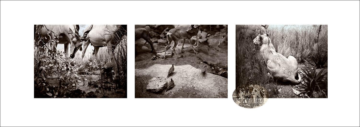 lion-and-antelope-1.jpg