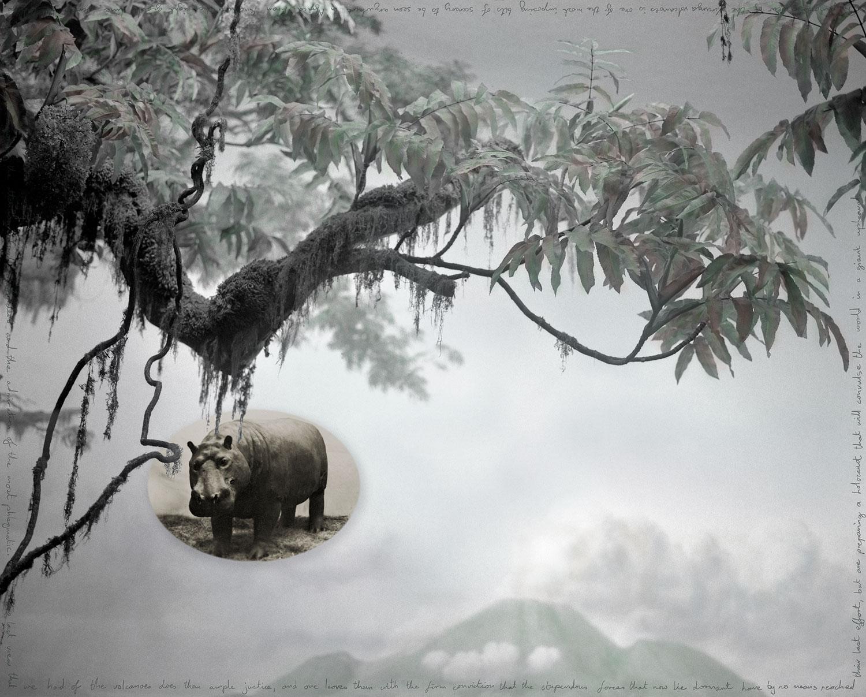 natural-history_hippo.jpg
