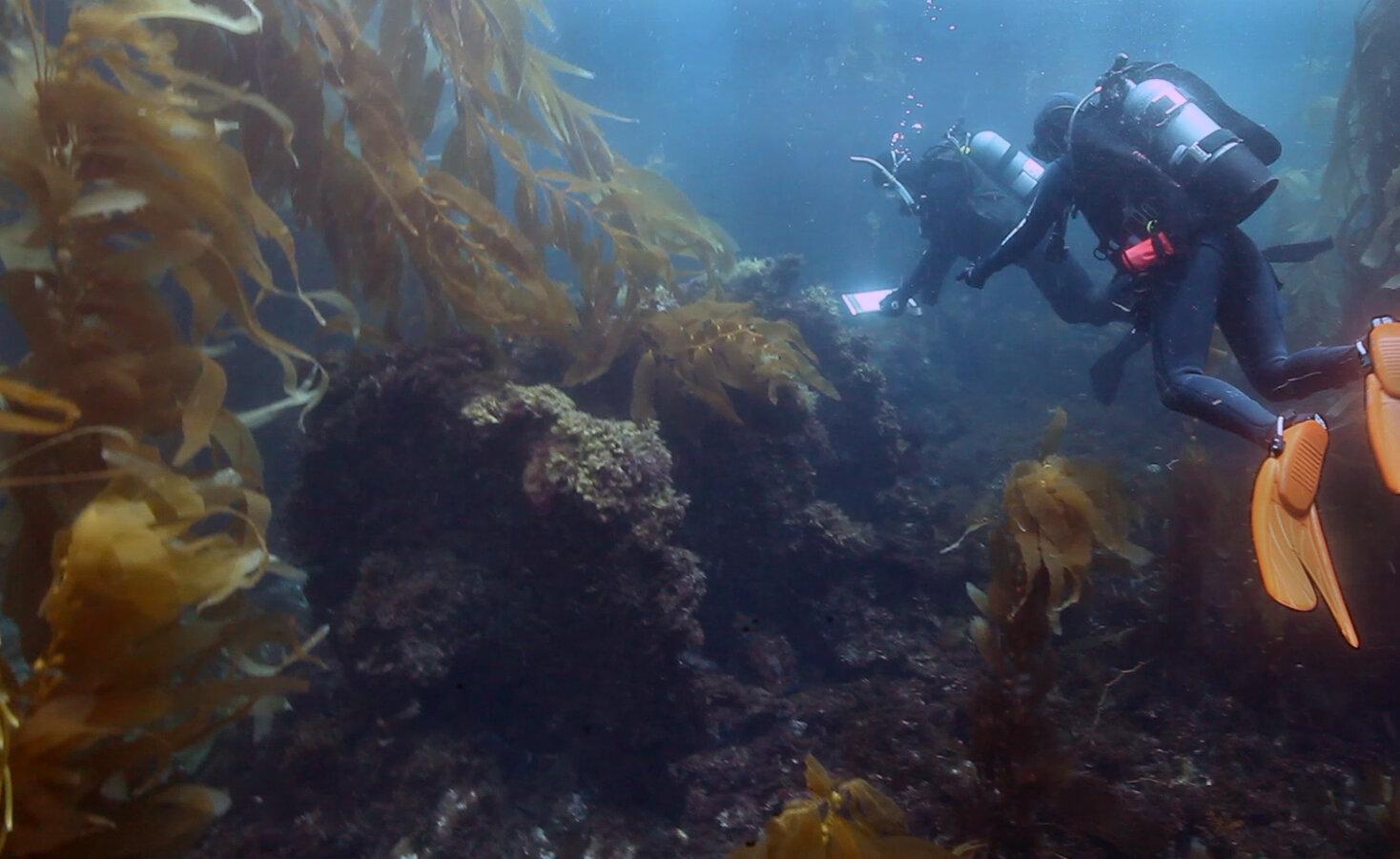 Underwater footage of the Winfield Scott shipwreck