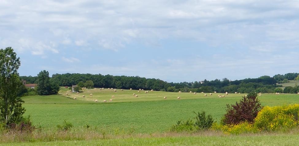 the western meadow