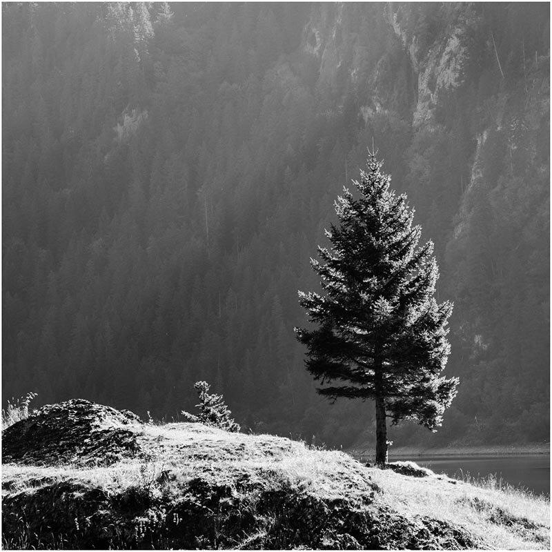DIGITAL - Set Subject (Backlit) - Commended - Weibel JeanPhilippe, Lone fir tree