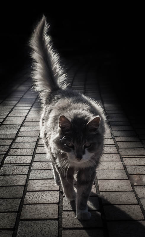 PRINT - Set Subject (Backlit) - Commended - Maloney Andrea, the tale of the wondering cat