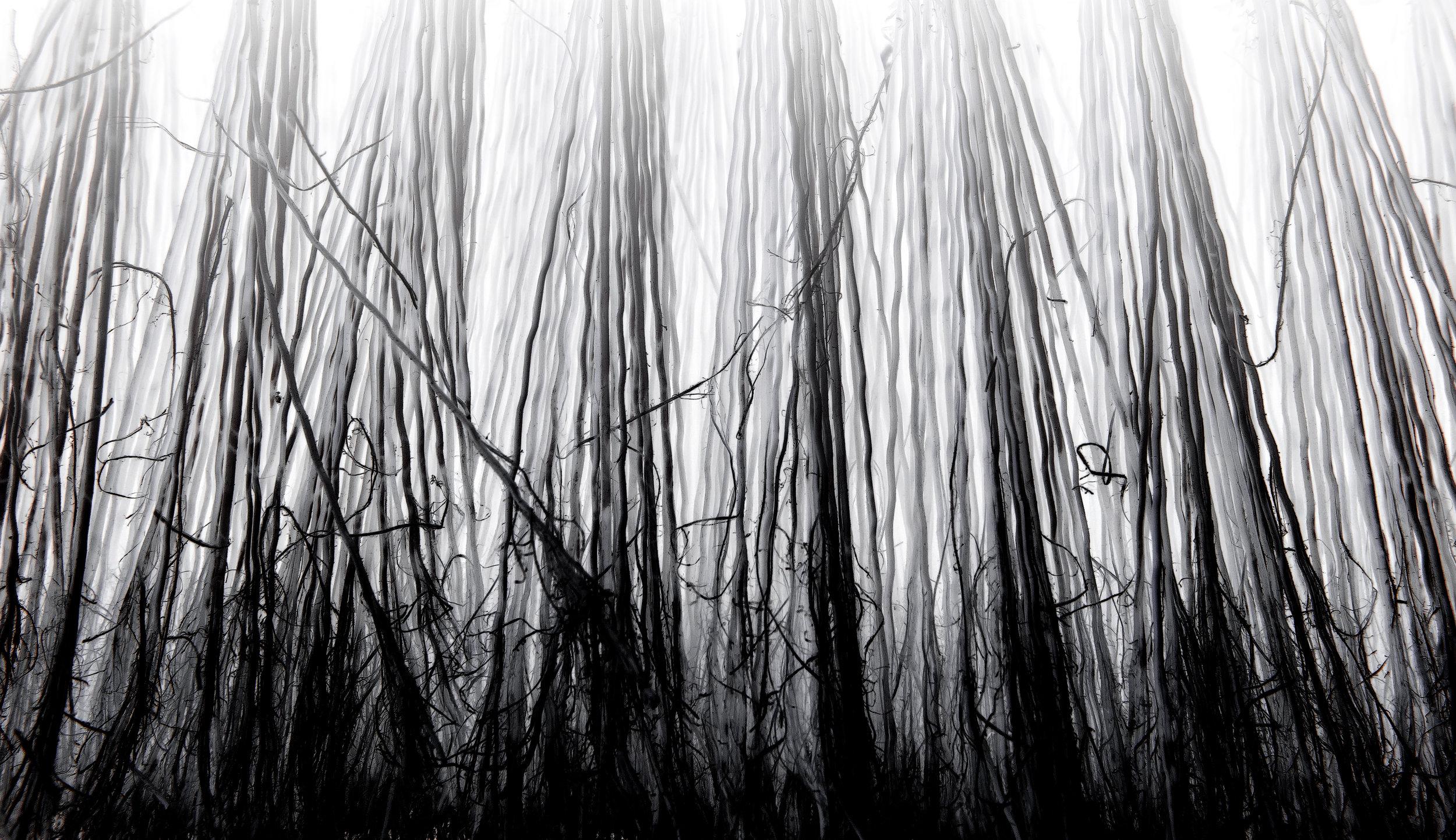 DEMENTED  (broom bristles)
