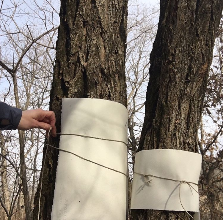 Wrapping Wet Paper Around Trees