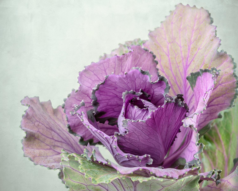 Longfellow's Kale
