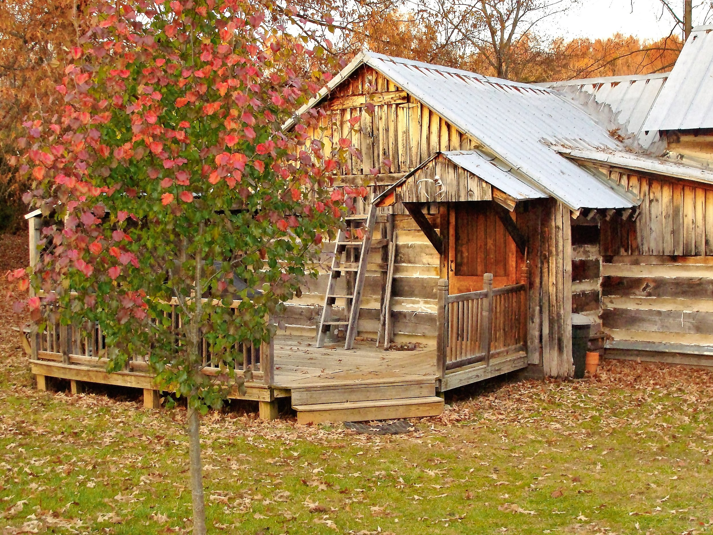 Antonia Albano   Homesteaders Cabin in FALL.JPG