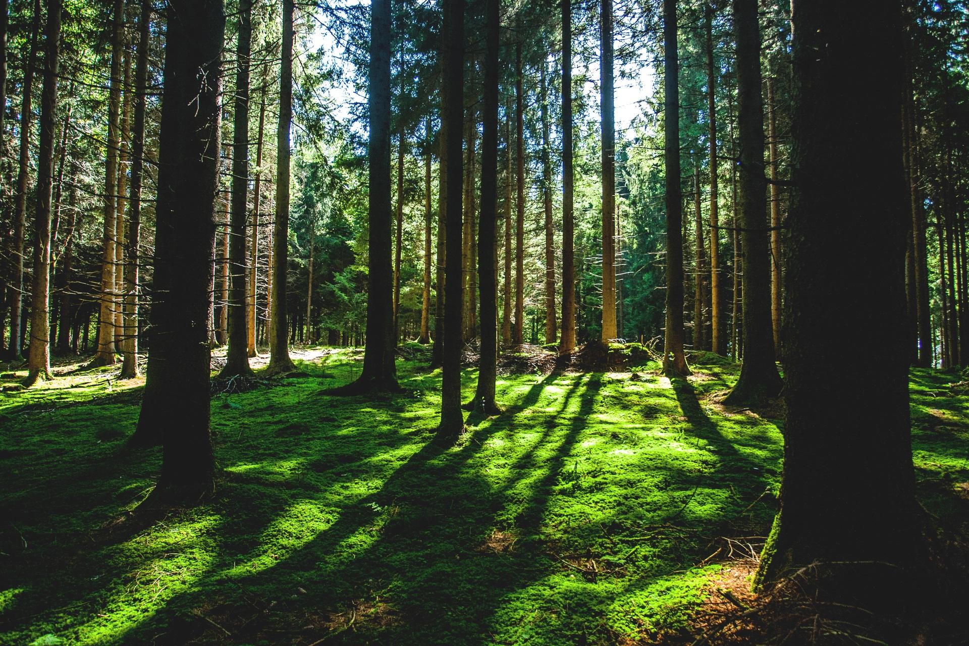 아침 숲속의 신선한 산소 같은 음악