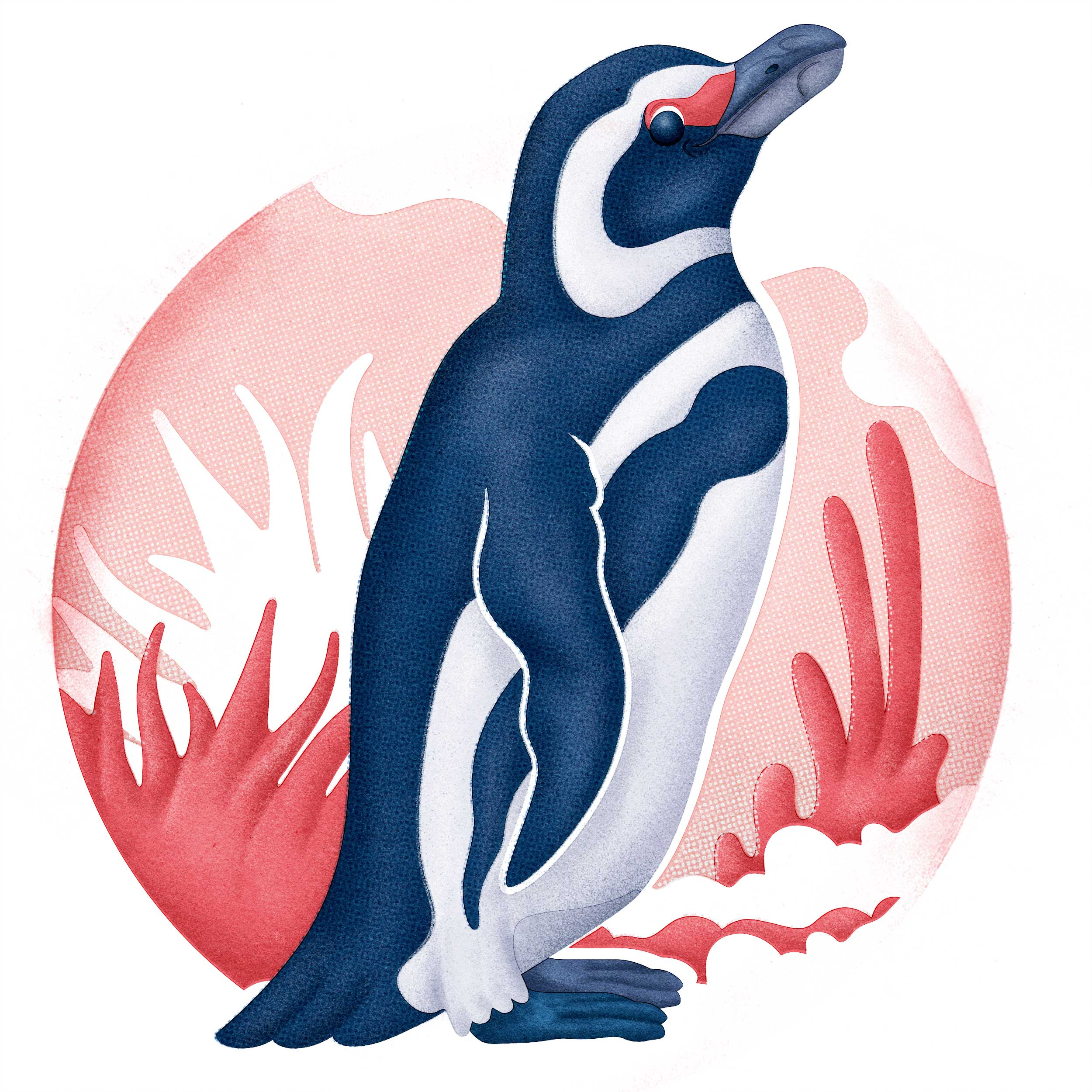 Magellenic-Penguin.jpg