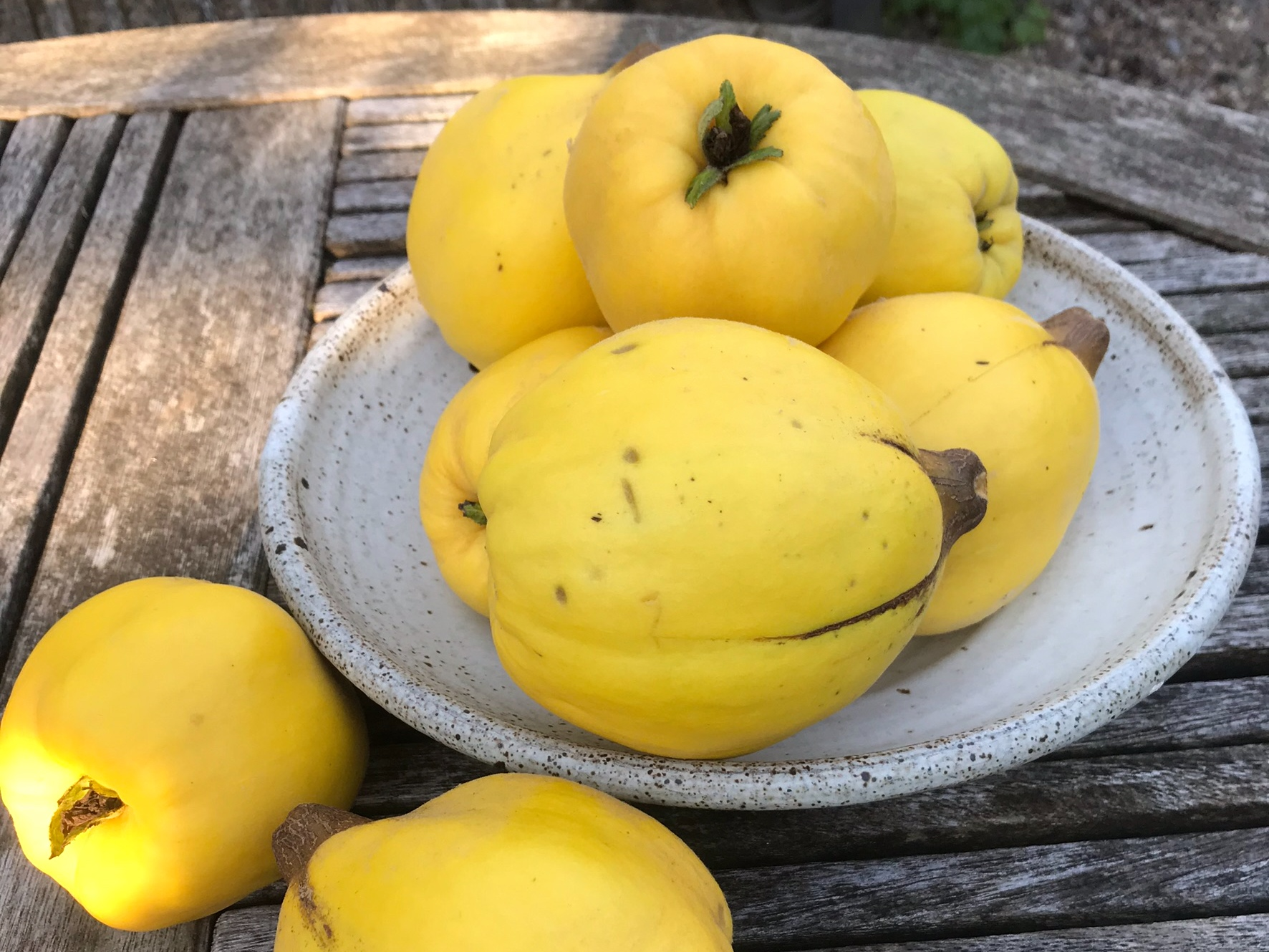 Quince harvest