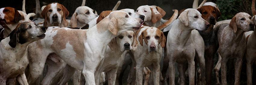 Terapia fobia a los perros Centro Progreso Psicólogos Parla