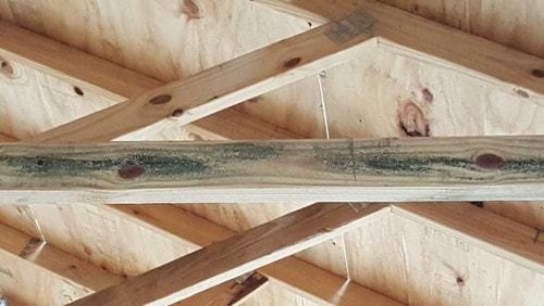 lumberyard-mold_orig.jpg