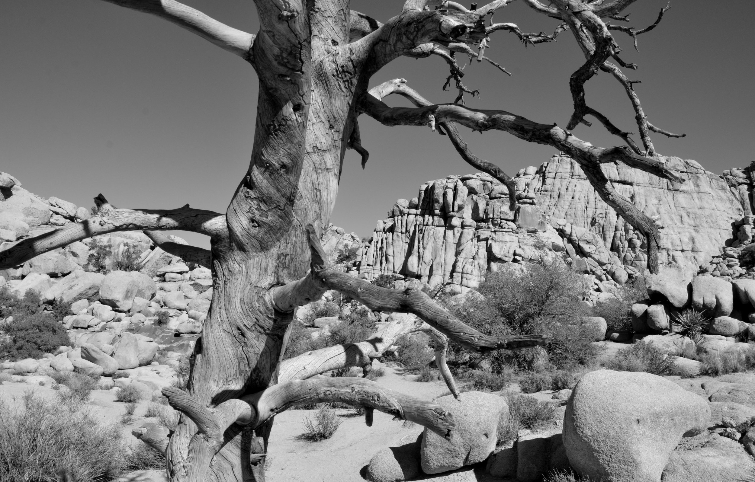 Joshua Tree National Park, Arizona, U.S.A.