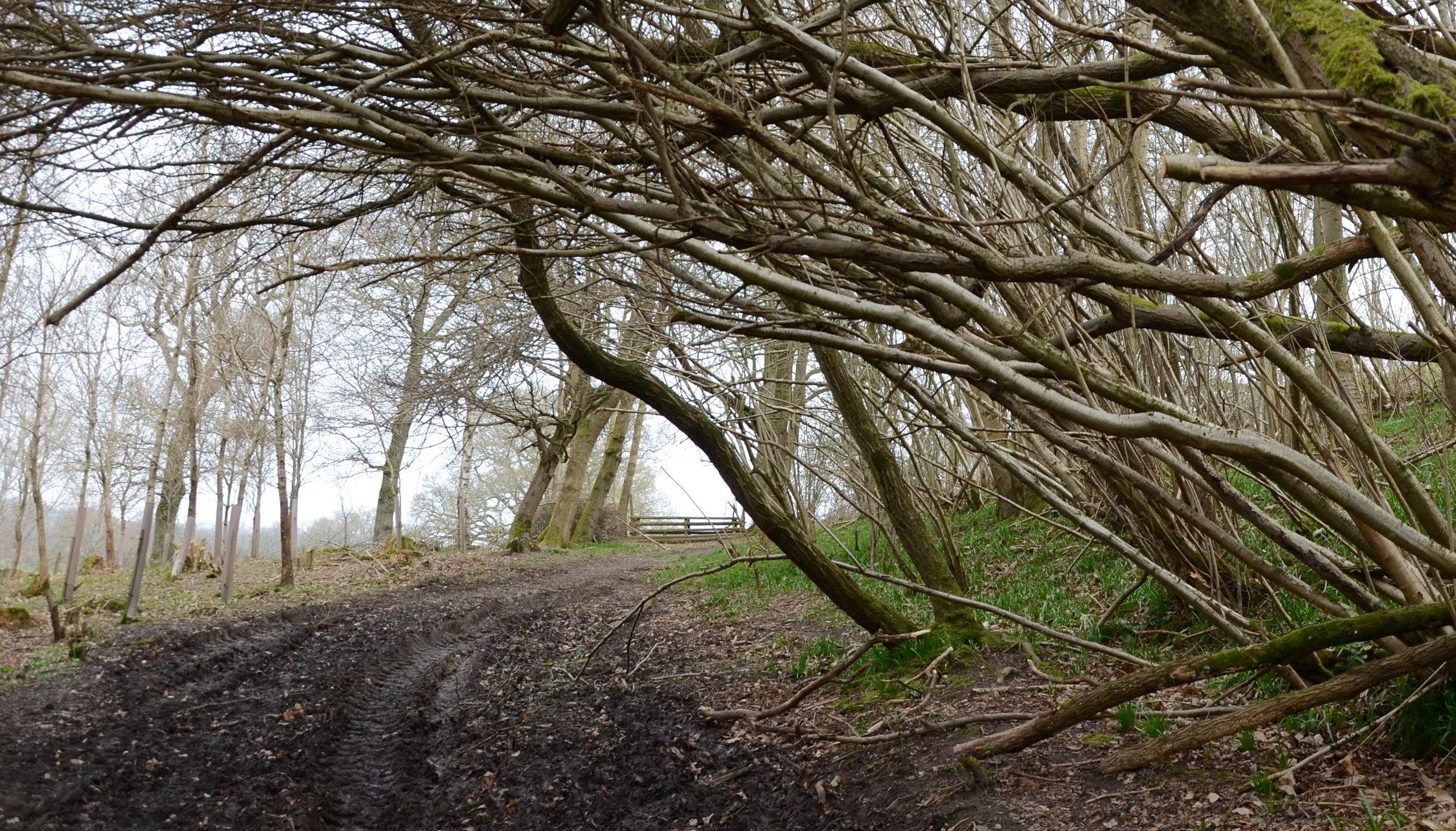 Lodsworth, Sussex