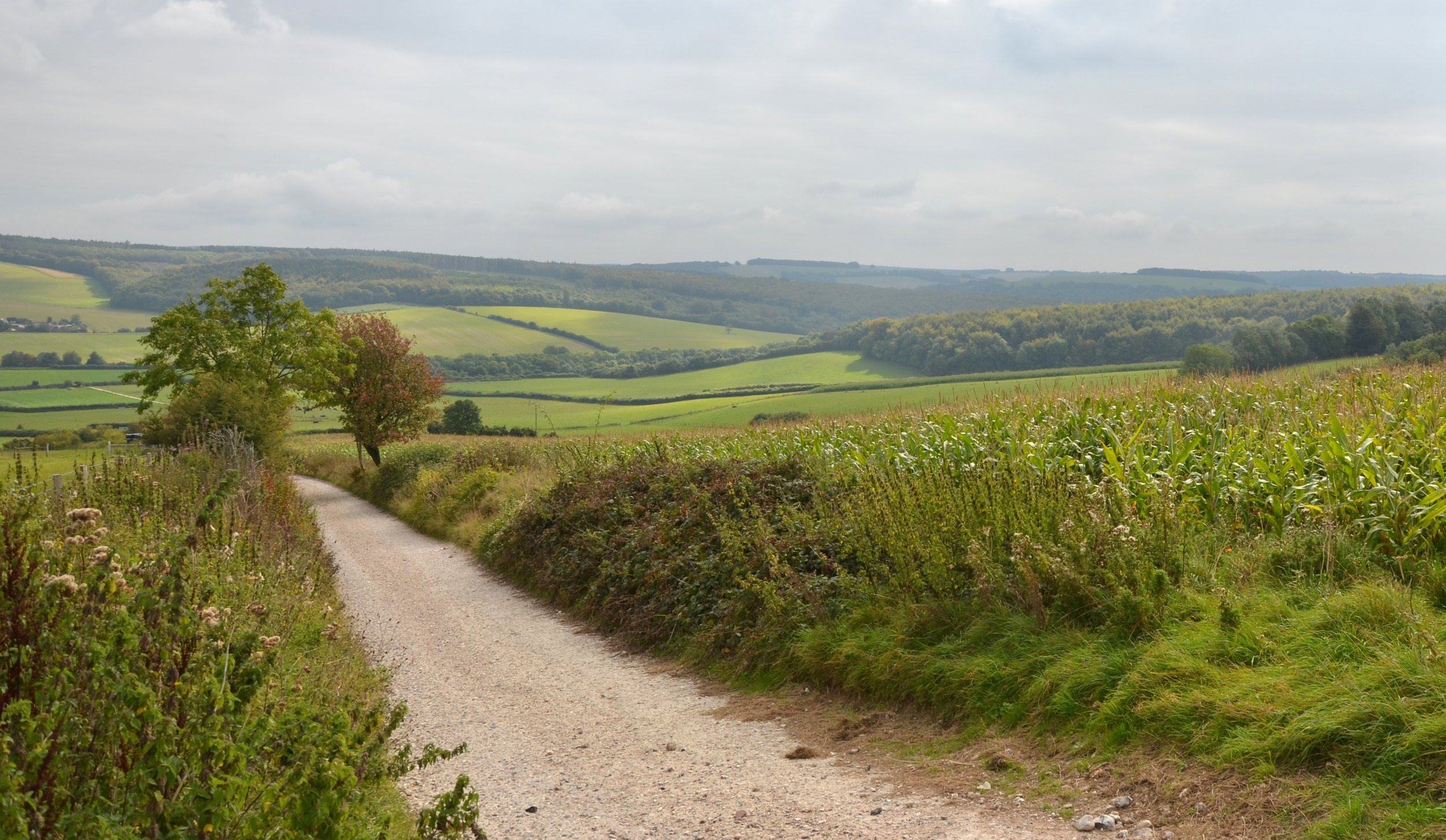 Sussex Downs, England