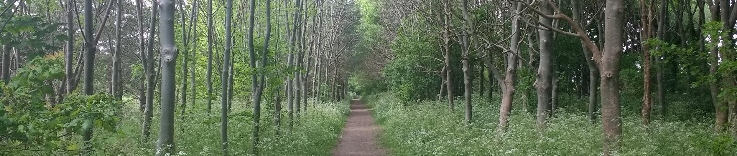 Cambridge Woodland Path