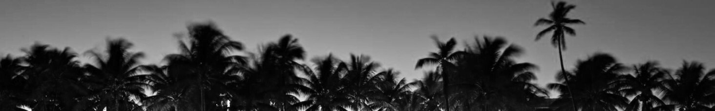 south-beach-miami-palm-trees-ocean-drive-1.jpg