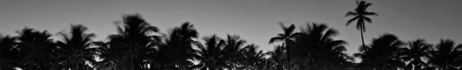 south-beach-miami-palm-trees-ocean-drive-1.jpg