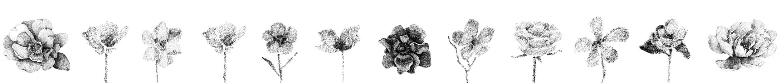 pencilflowers_all.jpg