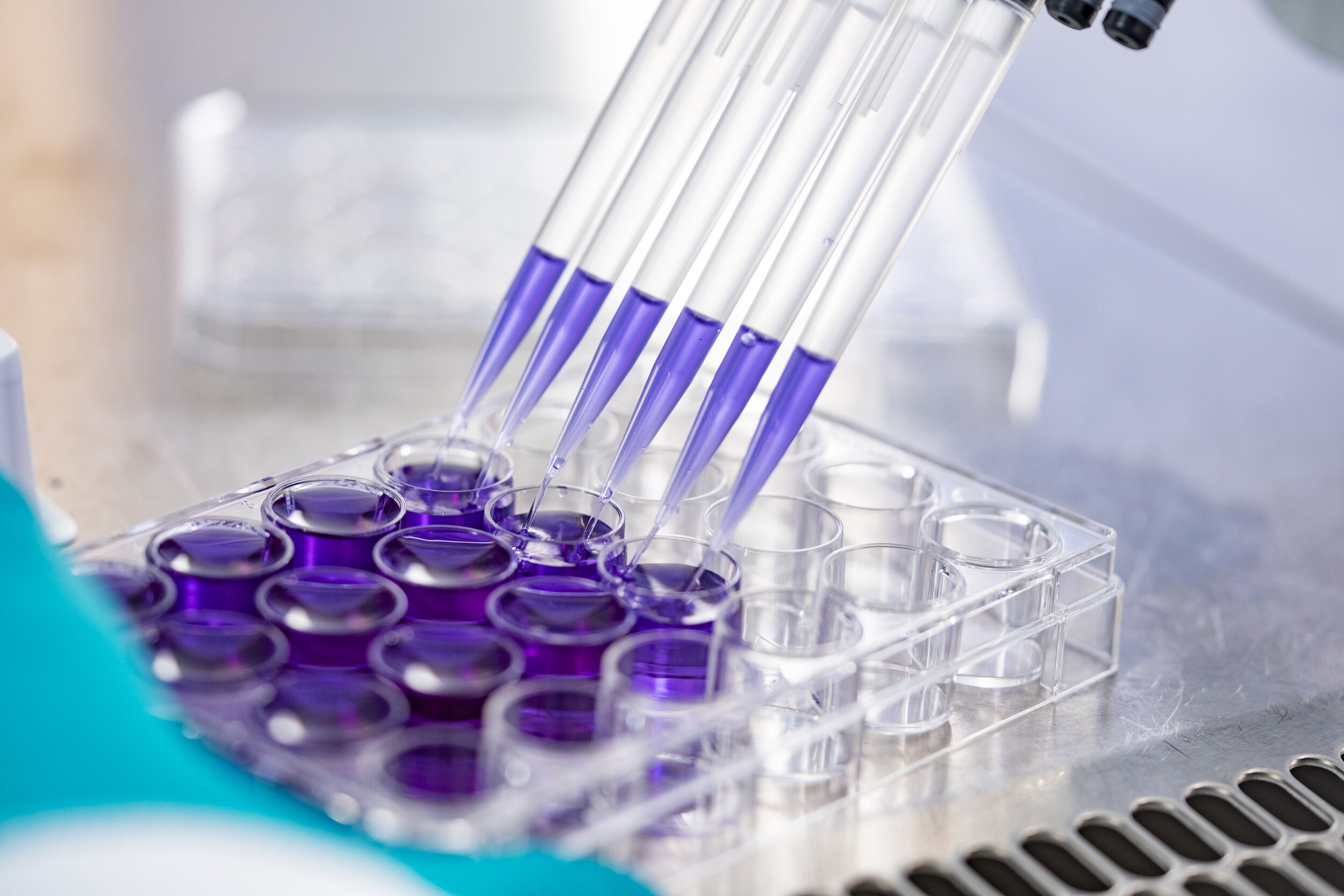 Microbiologie Bioassays Hensen 2018 12 07-021.jpg