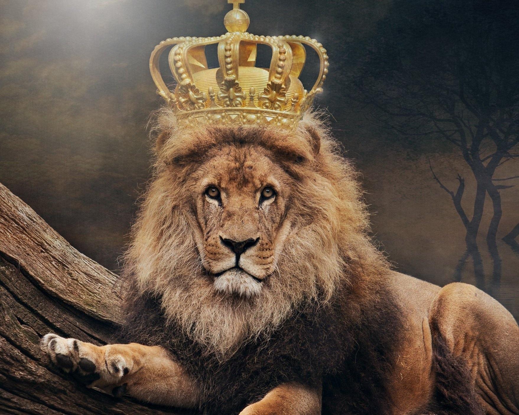 Lion+Crown.jpg
