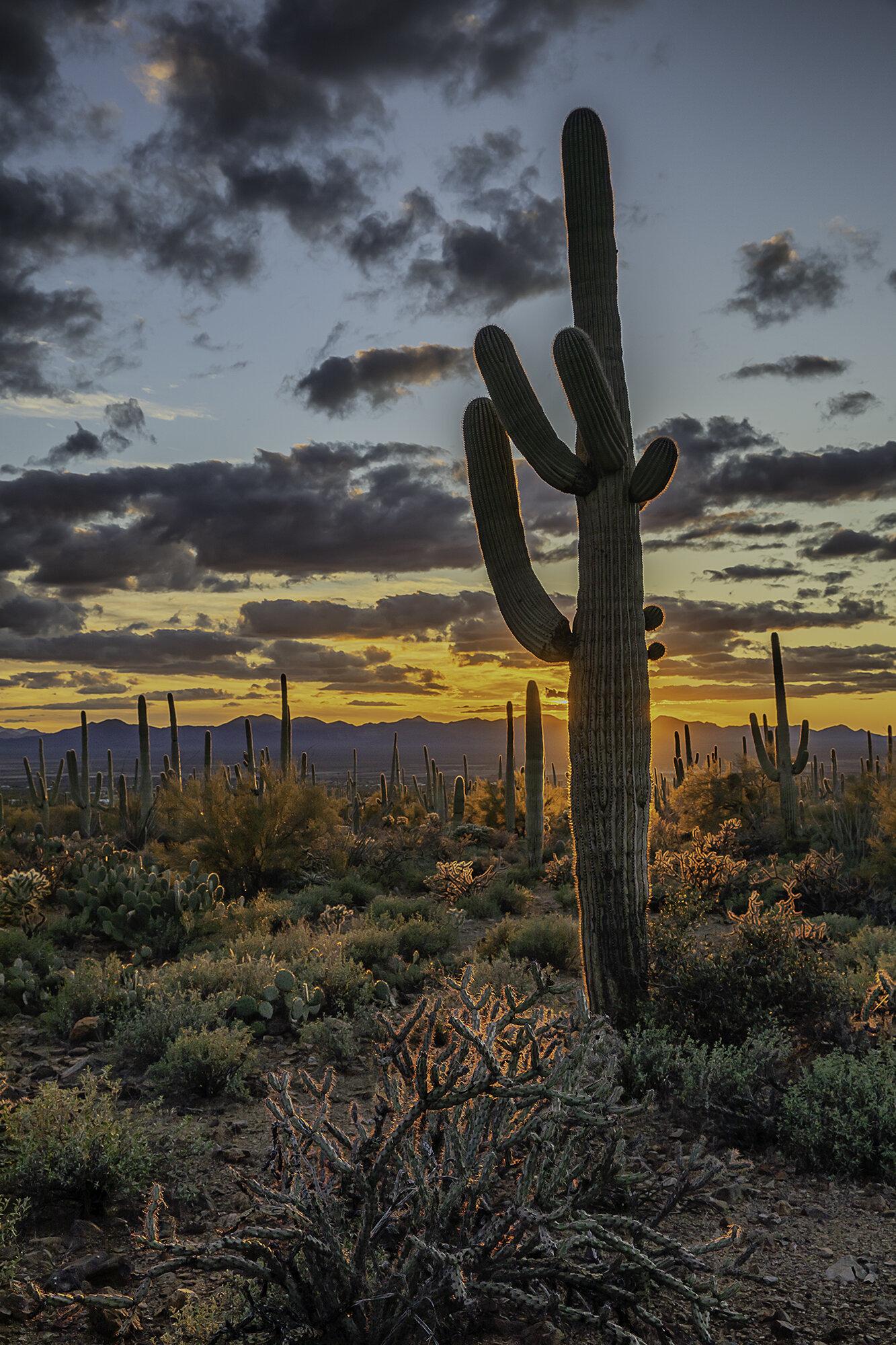 SaguaroSmall.jpg