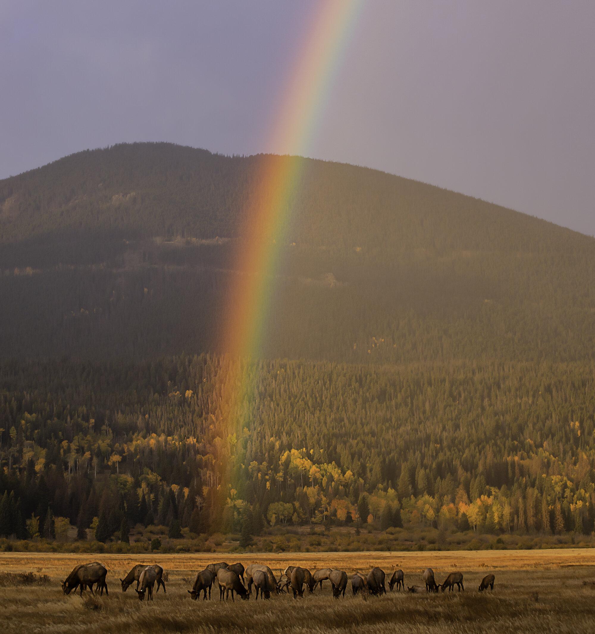 RainbowElkSmall.jpg