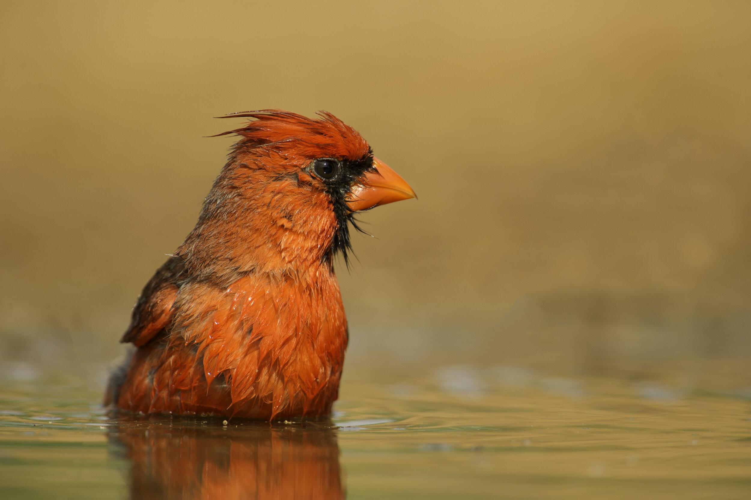 CardinalPond.jpg