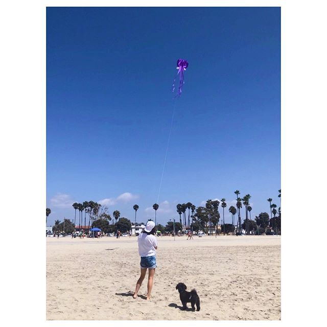 Hey Grizzly, this is how you fly a kite 🎏 . . . . . . . . . . .  #designer #graphicdesigner #entrepreneur #fun #dailygram #instagood #데일리 #여행 #happy #rightbrainfounder #portrait #igers #photooftheday #instagood #instamood  #셀카 #mood  #nice #selfie #healthy #nature #여행스타그램 #style #losangeles #la #sunny #summer #puppylove