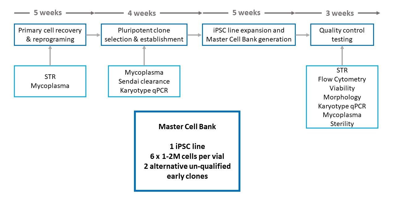iPSC reprogramming schedule.jpg