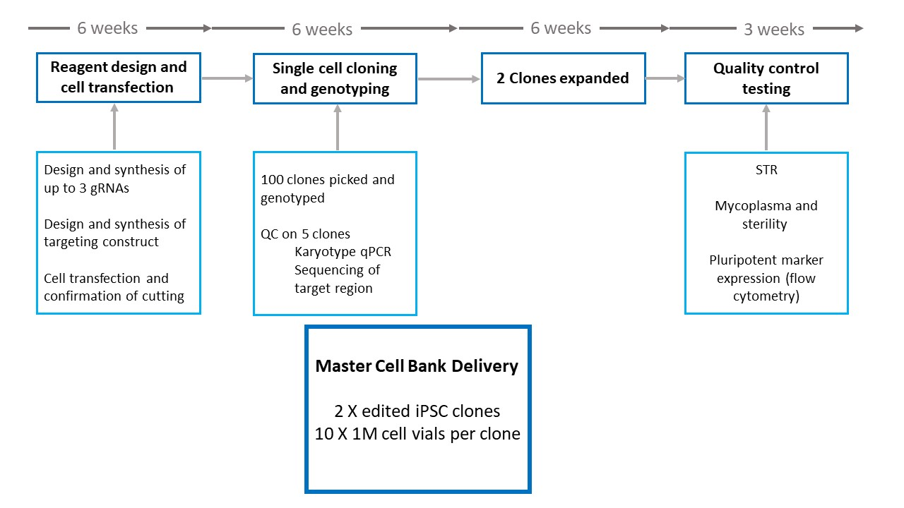 iPSC gene editing delivery time lines.jpg