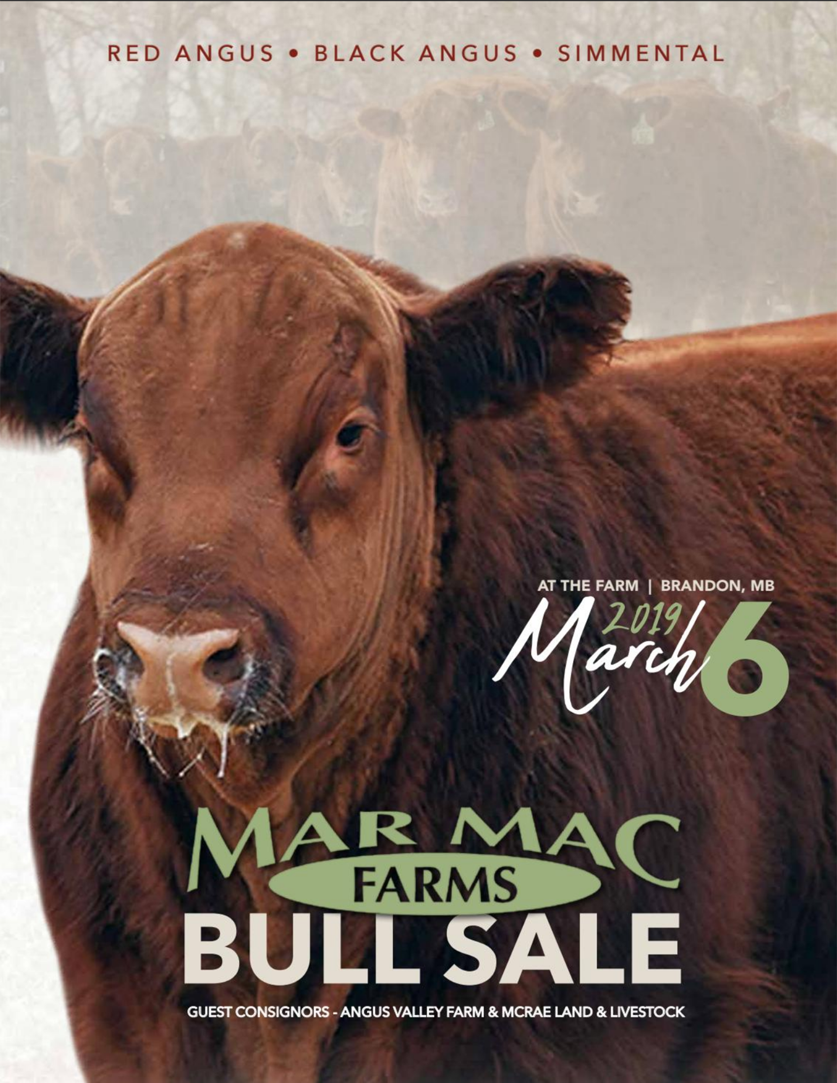 2019 Bull Sale.png
