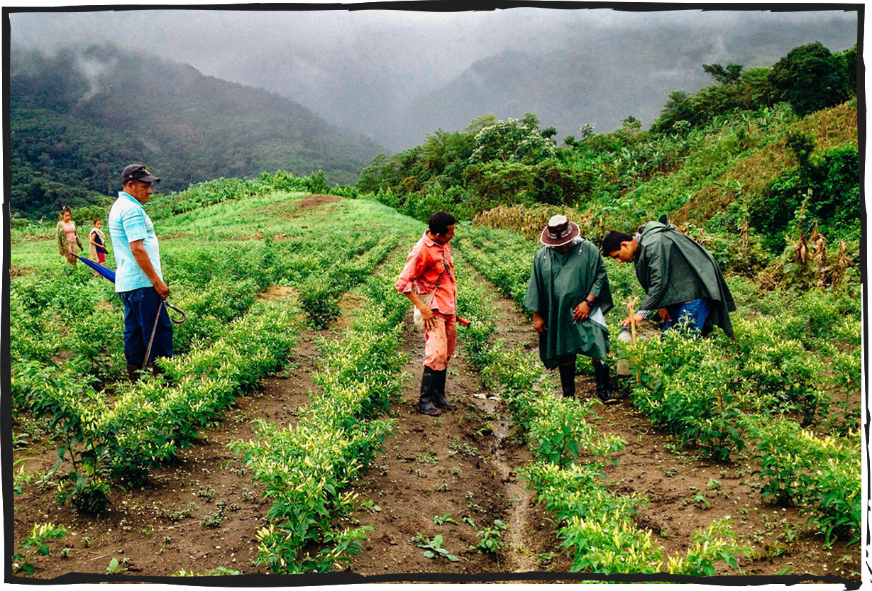 From our family to yours. - Our family has cultivated hot peppers since 1967. We work with hundreds of independent smallholder farmers to increase quality and yields, and improve the livelihoods of farming families.