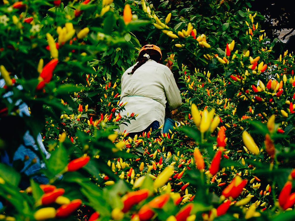 woman-pepper-circle.jpg