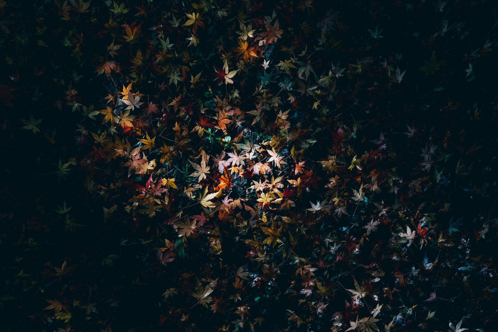 Black Spur zorali-1.jpg