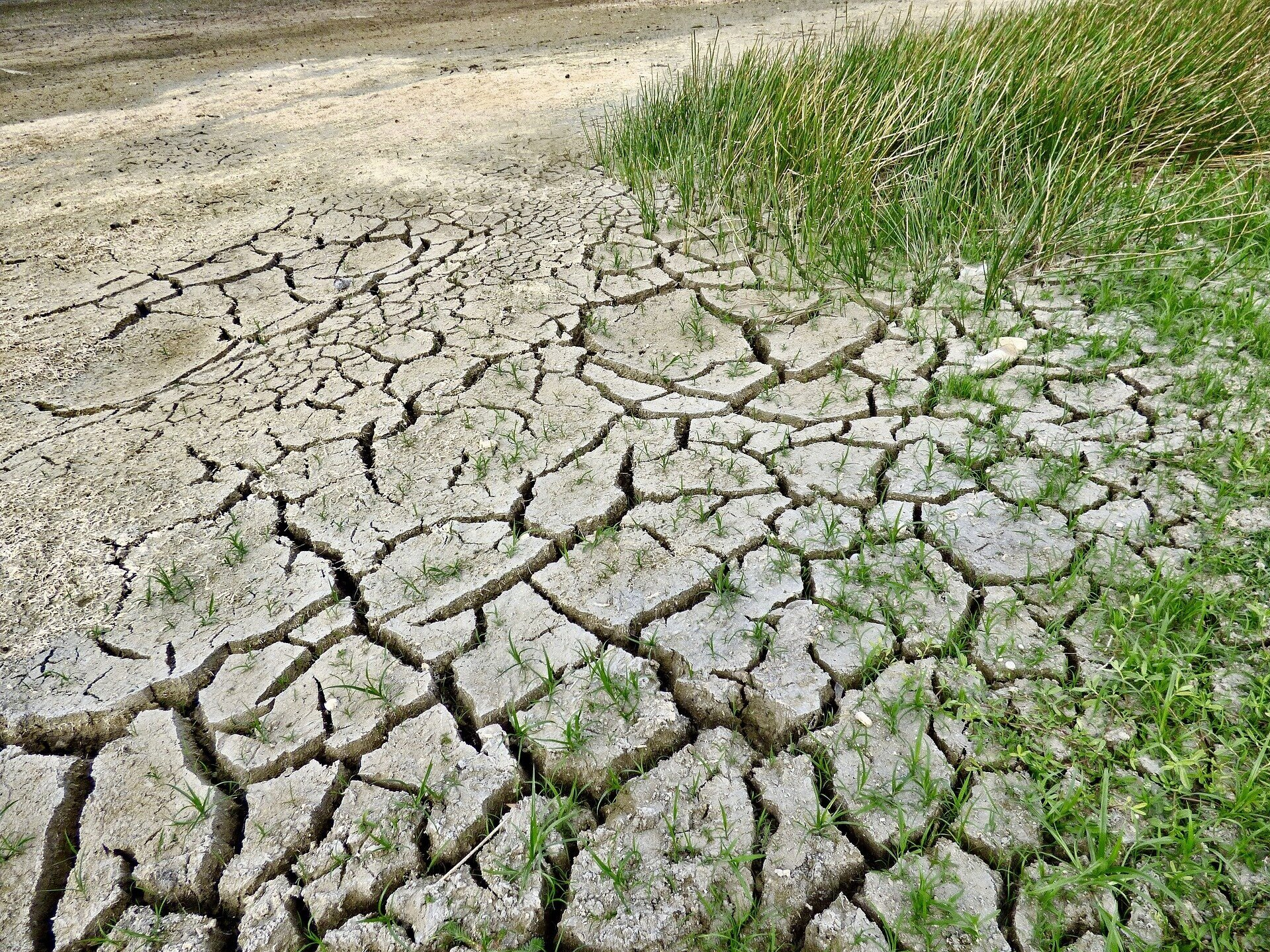 Nature loss puts businesses and the economy at risk - There is mounting evidence that the health of our planet is declining at a rate never seen in human history and putting the global economy at risk. The earth is under ever-increasing pressure, wildlife is disappearing, sea and land are being degraded, and resources are becoming scarce.