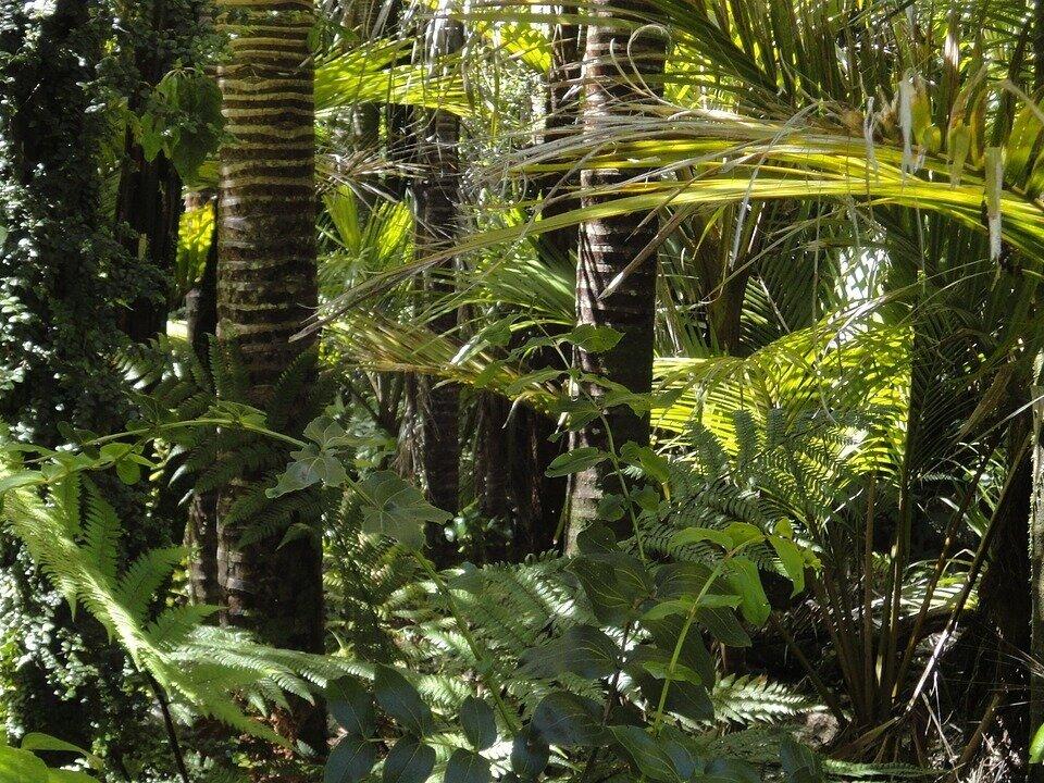 rainforest-78516_1280.jpg