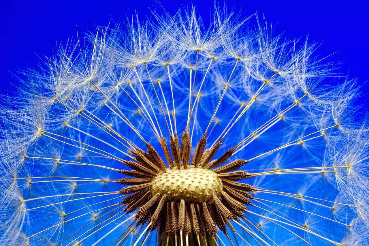 nature-3092555_1280.jpg