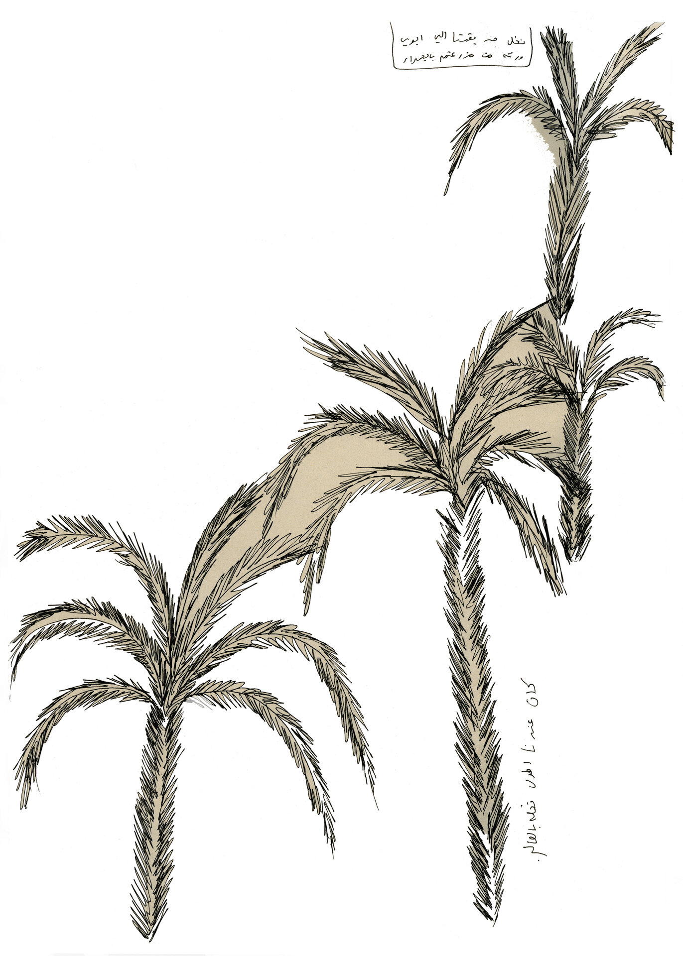 palms copy- cleaned.jpg