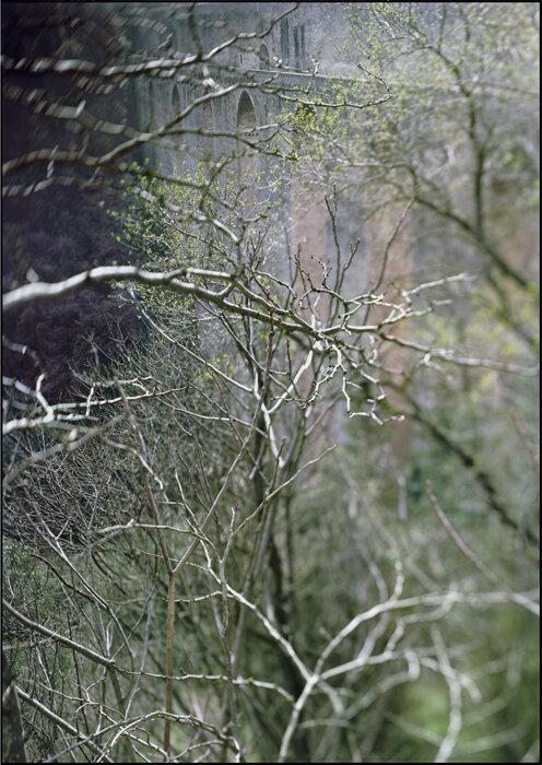 24_small-witch-y-branches-114011813prntd_v2.jpg